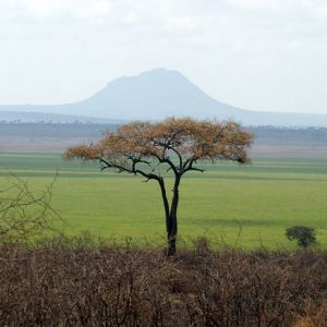Tanzanian Green - Tarangire National Park, Mount Kitibong in background.