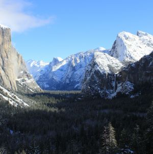Yosemite Spotlight - Seeing the tree for the forest.