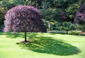 Tree with Shadow. The evolution of the human species on the African savanna has instilled an instinctual attraction to shade trees. Butchart Gardens.