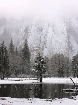 Tree on Lake (Yosemite)